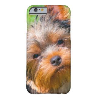 Yorkshire Terrier que mira para arriba Funda Para iPhone 6 Barely There