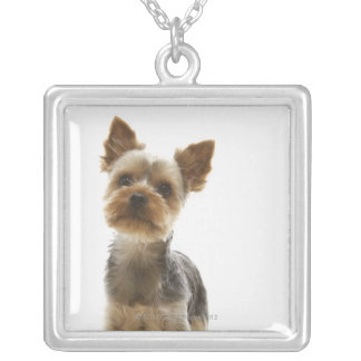 Yorkshire Terrier Silver Plated Necklace