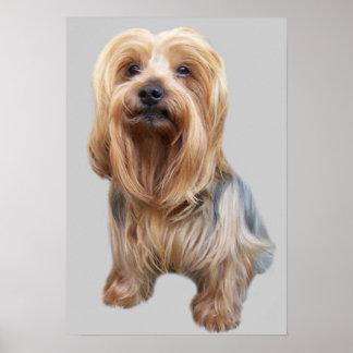 Yorkshire Terrier So Cute Print