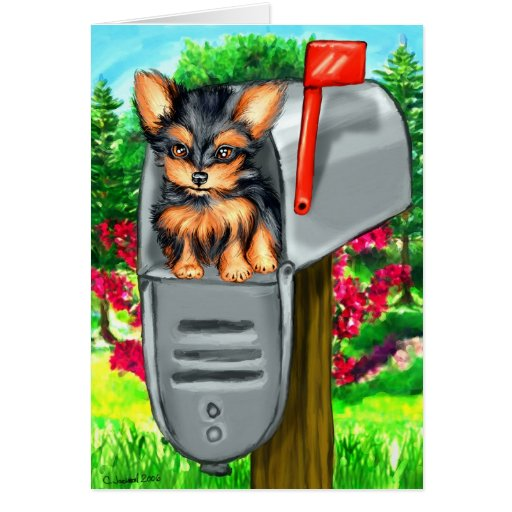 Yorkshire Terrier Special Delivery Greeting Cards