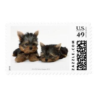 Yorkshire Terrier Stamp