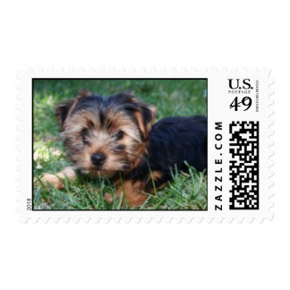 yorkshire terrier stamp