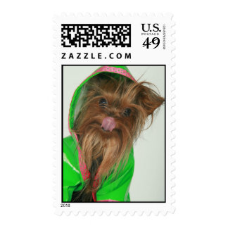 Yorkshire Terrier Stamps
