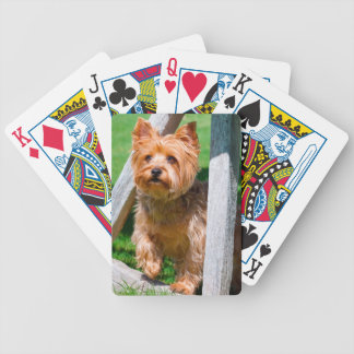Yorkshire Terrier standing in a wagon wheel Bicycle Playing Cards