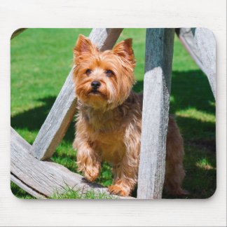 Yorkshire Terrier standing in a wagon wheel Mouse Pad