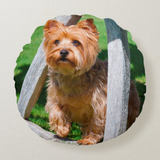 Yorkshire Terrier standing in a wagon wheel Round Pillow
