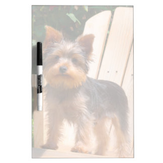 Yorkshire Terrier standing on wooden chair Dry-Erase Board