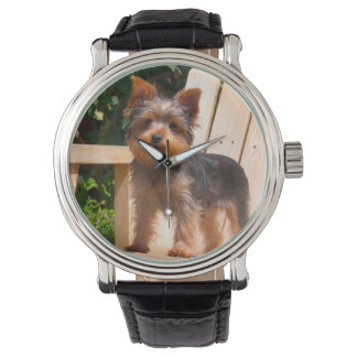 Yorkshire Terrier standing on wooden chair Wristwatch
