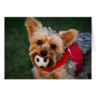 Yorkshire Terrier Tarjeta