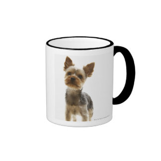Yorkshire Terrier Taza A Dos Colores