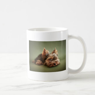 Yorkshire Terrier Taza Básica Blanca