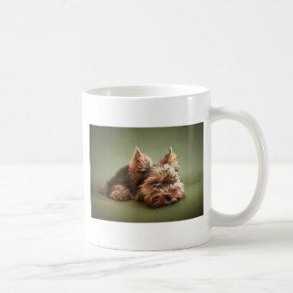 Yorkshire Terrier Taza Clásica