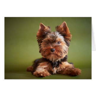 Yorkshire Terrier Thank You Greeting Card