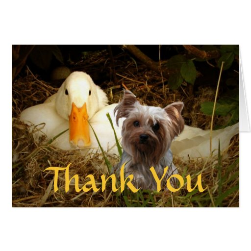 Yorkshire Terrier Thank You Card With Duck