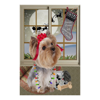 Yorkshire Terrier Waiting for Santa Prints