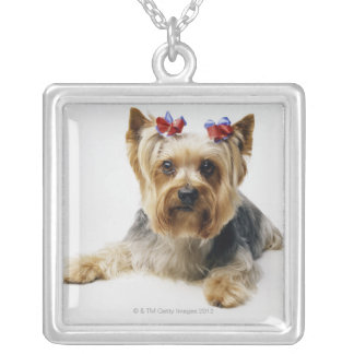 Yorkshire terrier wearing red bows silver plated necklace