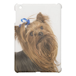 Yorkshire Terrier / Yorkie. Lively breed of iPad Mini Covers