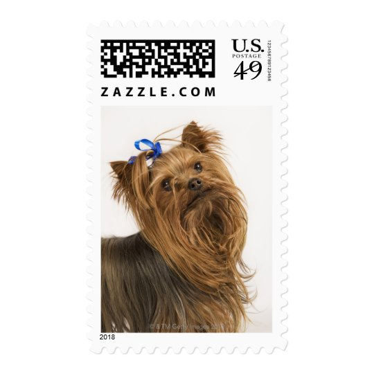 Yorkshire Terrier / Yorkie. Lively breed of Postage