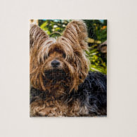 Yorkshire Terrier Yorkie Puzzles