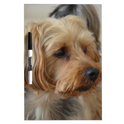 Yorkshire Terrier Zac Dry-Erase Whiteboards