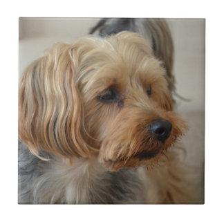 Yorkshire Terrier Zac Tile