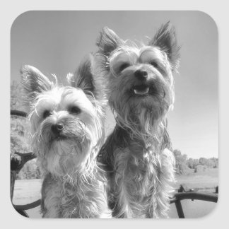 Yorkshire Terriers Black and White Square Sticker