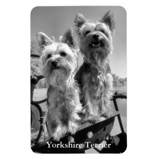 Yorkshire Terriers, Black & White, Magnet
