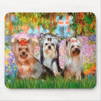 Yorkshire Terriers (three) - Garden Mouse Pad