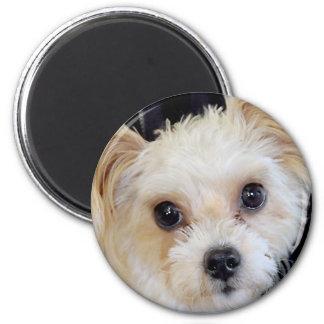 Yorkshire (Yorkie)/Shih Tzu Dog Breed Magnets