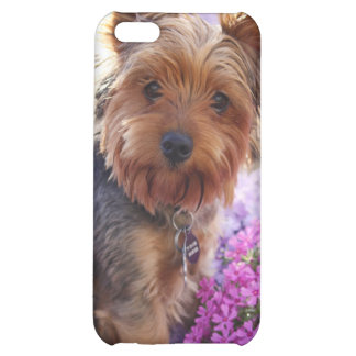 Yorkshires Terrier Iphone Case iPhone 5C Covers