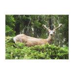 Yosemite Deer Nature Animal Photography Canvas Print