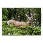 Yosemite Deer Nature Animal Photography Card