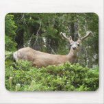 Yosemite Deer Nature Animal Photography Mouse Pad