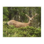 Yosemite Deer Nature Animal Photography Wood Wall Art