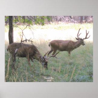 Yosemite Deer Poster