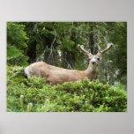 Yosemite Deer Print