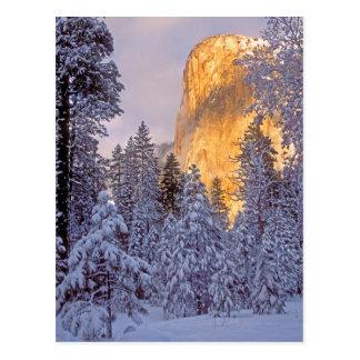 Yosemite - El Capitan lit by sunlight Postcard