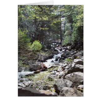 Yosemite in Springtime:  Bridalveil Falls Trail Card