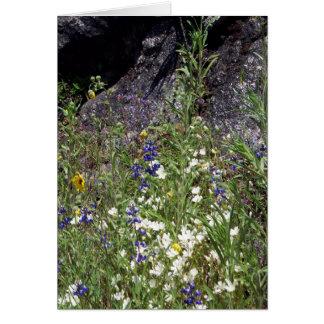 Yosemite in Springtime:  Mountain Wildflowers Card