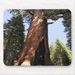 Yosemite National Park sequoia photo mousepad