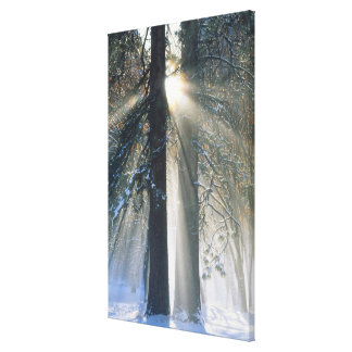 Yosemite National Park - Sun rays streaming Canvas Print