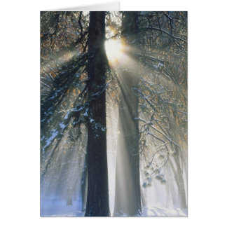 Yosemite National Park - Sun rays streaming Card