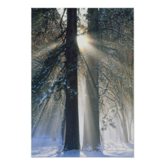 Yosemite National Park - Sun rays streaming Poster