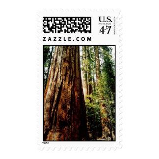 Yosemite Redwood Postage