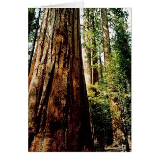 Yosemite Redwoods Card