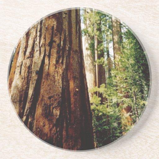 Yosemite Redwoods Drink Coasters