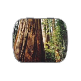 Yosemite Redwoods Jelly Belly Candy Tins