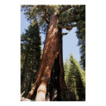 Yosemite sequoia color photo poster print