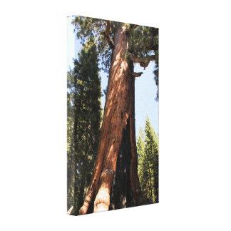 Yosemite sequoia tree color photo canvas print