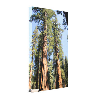 Yosemite sequoia trees color photo canvas print